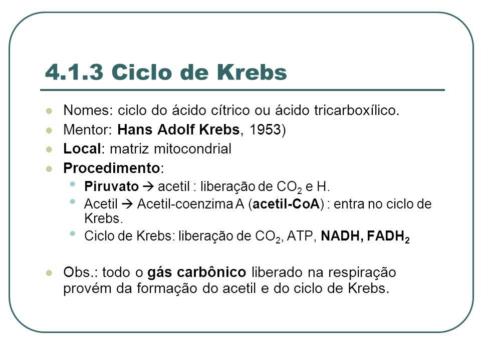 4.1.3 Ciclo de Krebs Nomes: ciclo do ácido cítrico ou ácido tricarboxílico.