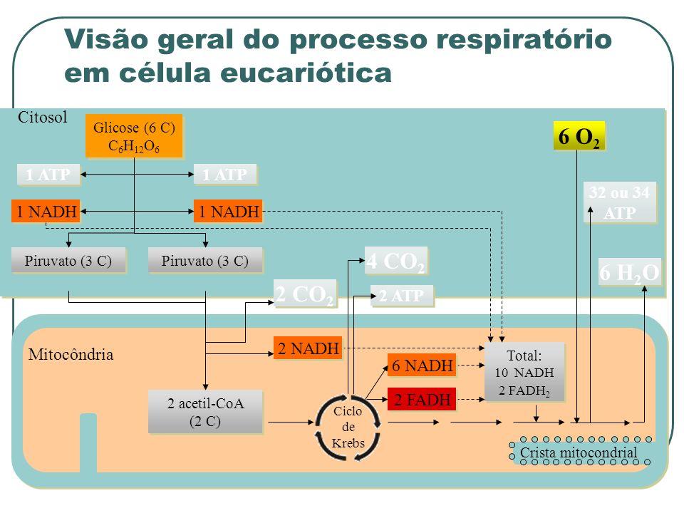 Citosol Crista mitocondrial Mitocôndria Glicose (6 C) C 6 H 12 O 6 Total: 10 NADH 2 FADH 2 1 ATP 1 NADH Piruvato (3 C) 6 O 2 6 H 2 O 32 ou 34 ATP 6 NADH 2 FADH 2 ATP 4 CO 2 2 CO 2 2 NADH 2 acetil-CoA (2 C) Ciclo de Krebs Visão geral do processo respiratório em célula eucariótica