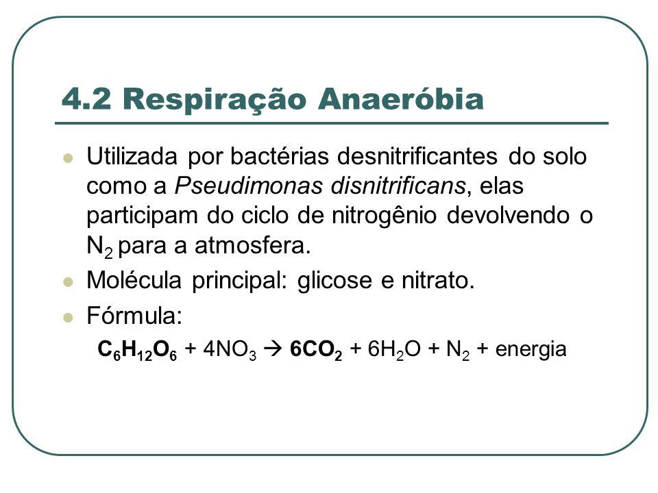 4.2 Respiração Anaeróbia Utilizada por bactérias desnitrificantes do solo como a Pseudimonas disnitrificans, elas participam do ciclo de nitrogênio devolvendo o N 2 para a atmosfera.