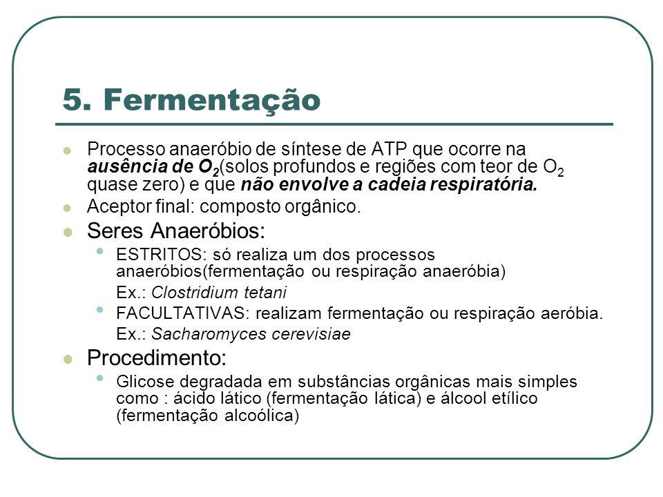 5. Fermentação Processo anaeróbio de síntese de ATP que ocorre na ausência de O 2 (solos profundos e regiões com teor de O 2 quase zero) e que não env