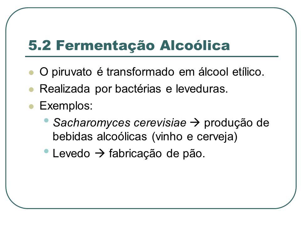 5.2 Fermentação Alcoólica O piruvato é transformado em álcool etílico.