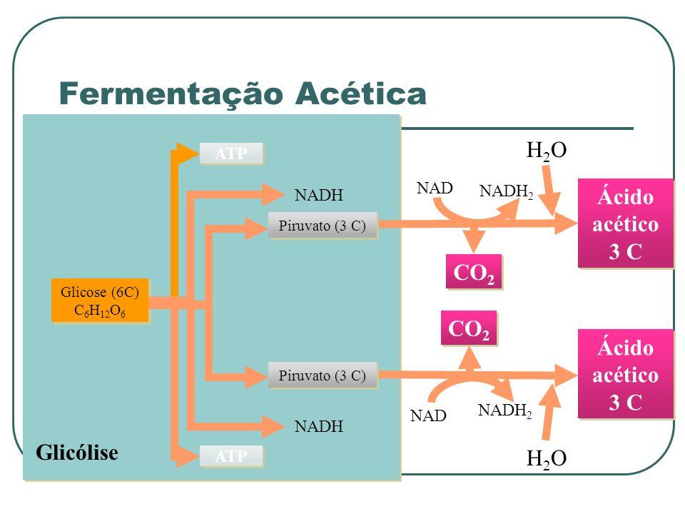 Glicólise Glicose (6C) C 6 H 12 O 6 ATP NADH Ácido acético 3 C CO 2 NAD NADH 2 H2OH2O Ácido acético 3 C CO 2 NAD NADH 2 H2OH2O Piruvato (3 C) Fermentação Acética