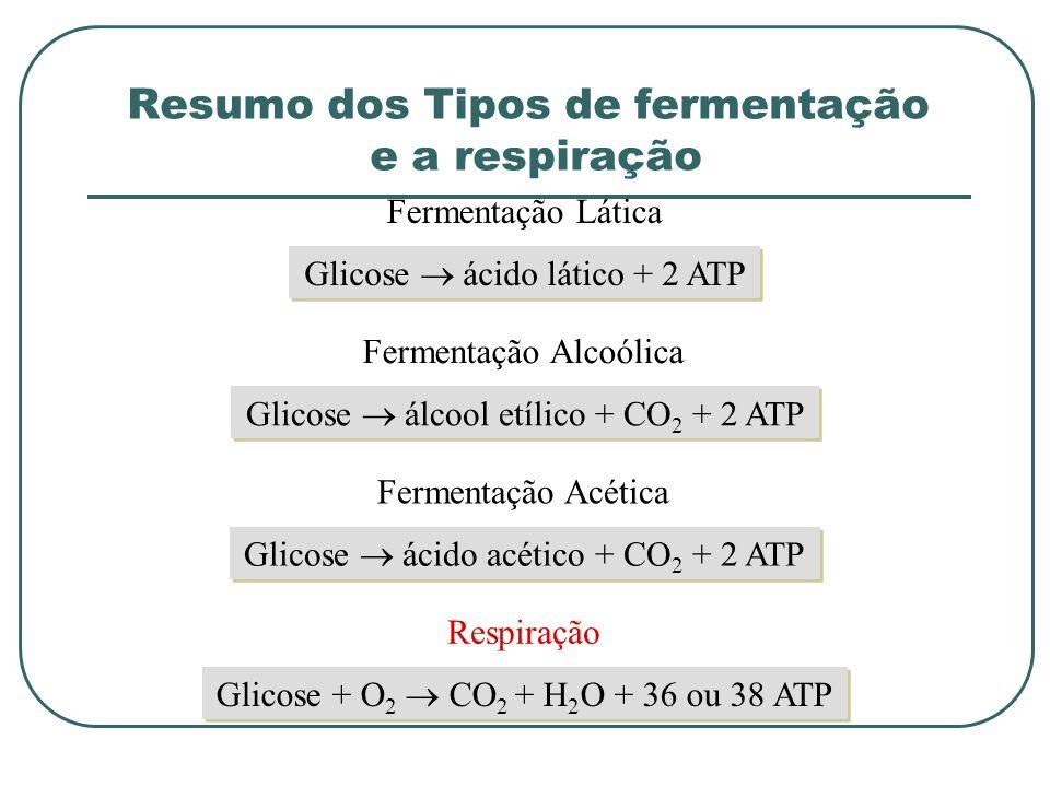 Glicose ácido lático + 2 ATP Fermentação Lática Glicose álcool etílico + CO 2 + 2 ATP Fermentação Alcoólica Glicose ácido acético + CO 2 + 2 ATP Fermentação Acética Glicose + O 2 CO 2 + H 2 O + 36 ou 38 ATP Respiração Resumo dos Tipos de fermentação e a respiração