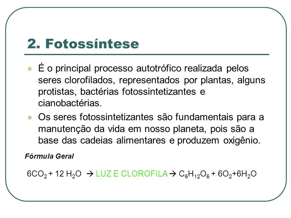 2. Fotossíntese É o principal processo autotrófico realizada pelos seres clorofilados, representados por plantas, alguns protistas, bactérias fotossin