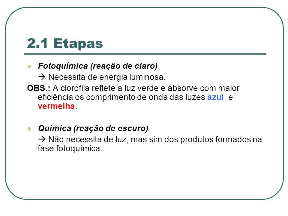 2.1 Etapas Fotoquímica (reação de claro) Necessita de energia luminosa.