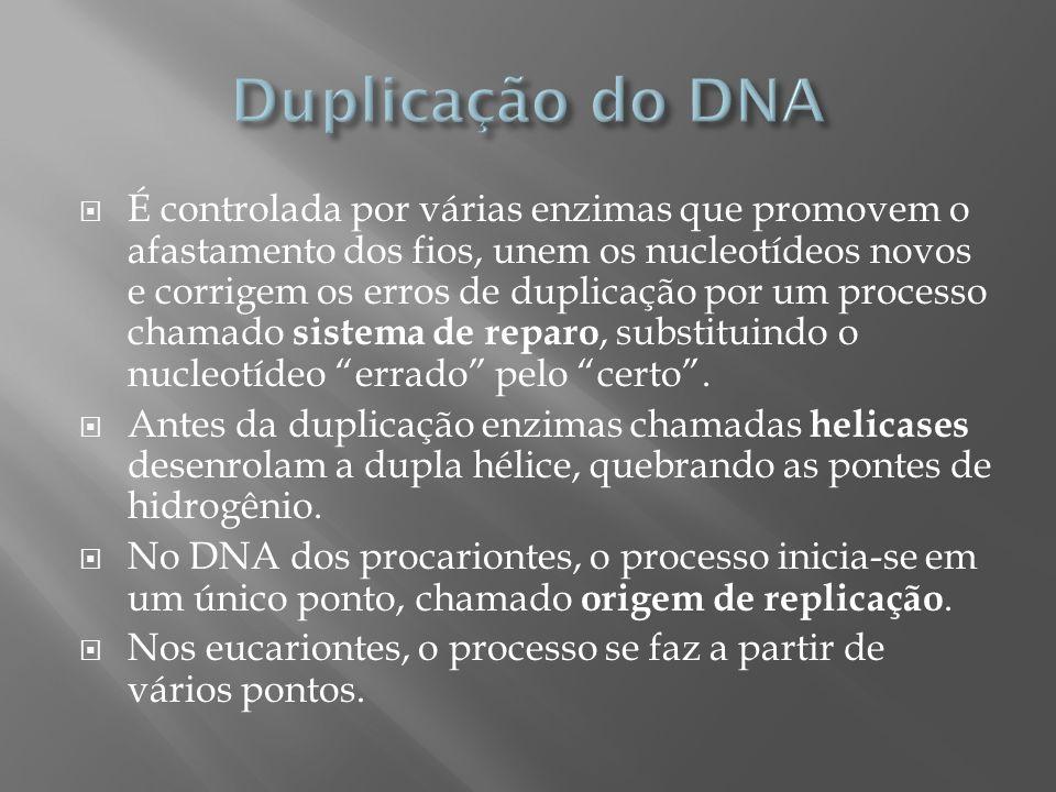 É controlada por várias enzimas que promovem o afastamento dos fios, unem os nucleotídeos novos e corrigem os erros de duplicação por um processo cham