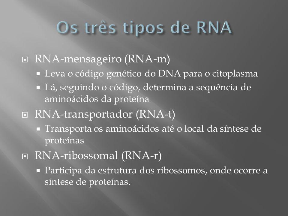 RNA-mensageiro (RNA-m) Leva o código genético do DNA para o citoplasma Lá, seguindo o código, determina a sequência de aminoácidos da proteína RNA-tra