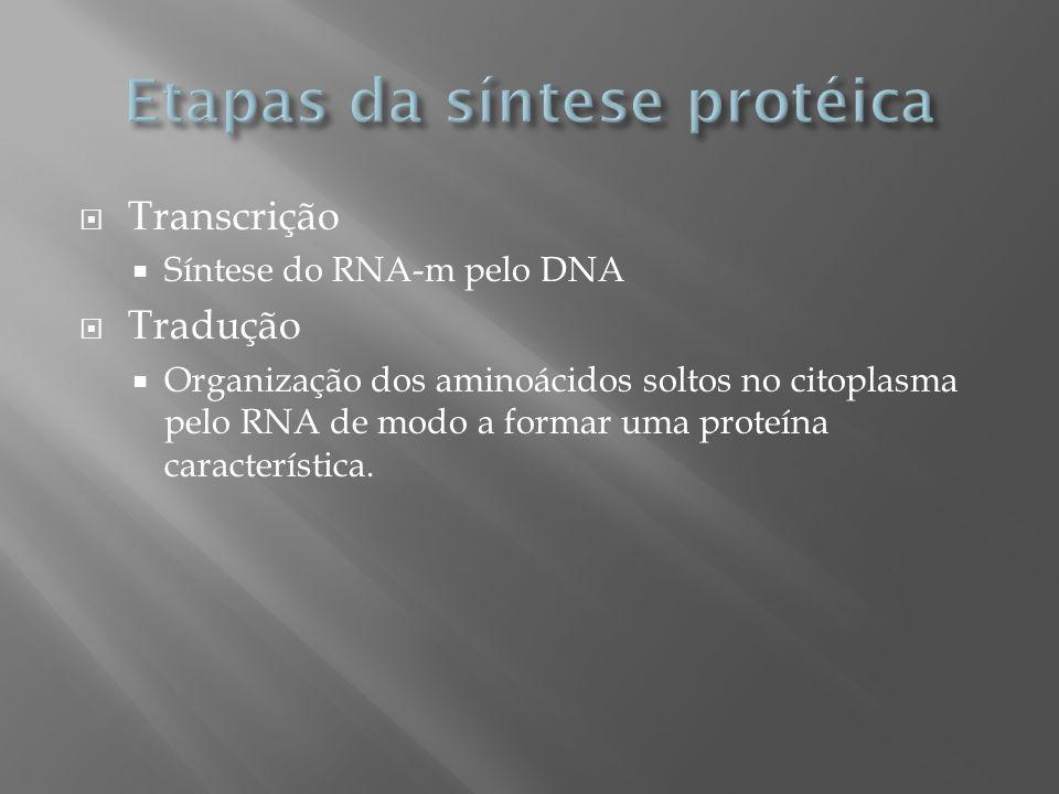 Transcrição Síntese do RNA-m pelo DNA Tradução Organização dos aminoácidos soltos no citoplasma pelo RNA de modo a formar uma proteína característica.