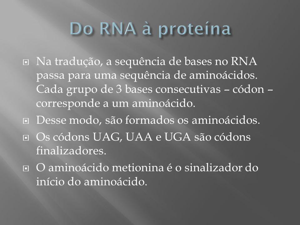 Na tradução, a sequência de bases no RNA passa para uma sequência de aminoácidos. Cada grupo de 3 bases consecutivas – códon – corresponde a um aminoá
