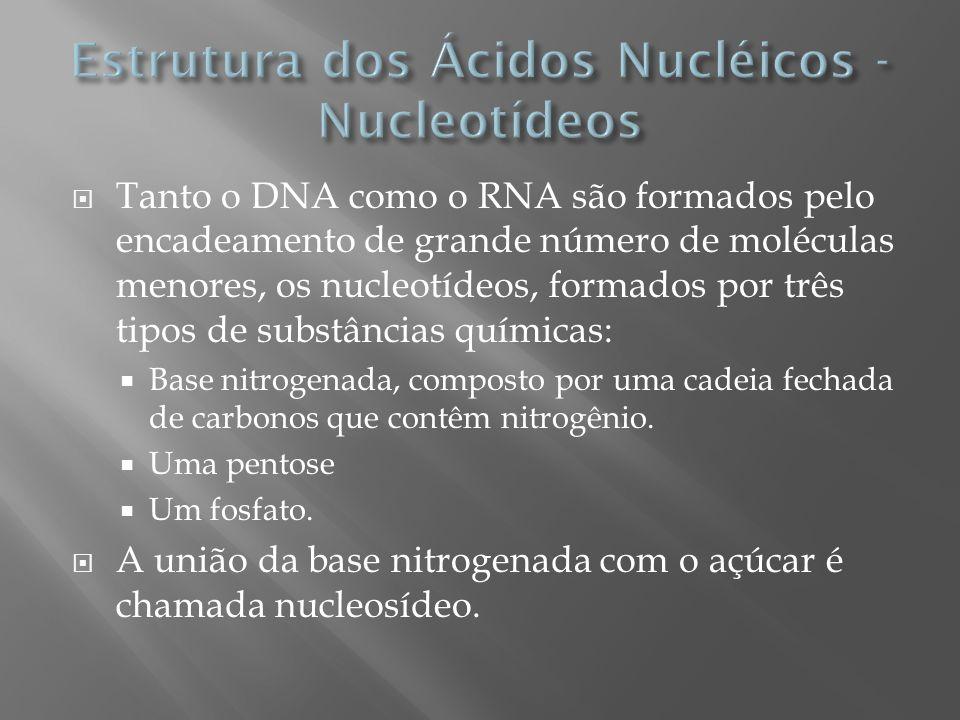 Cinco tipos: Adenina, Guanina, Citosina, Timina e Uracila.
