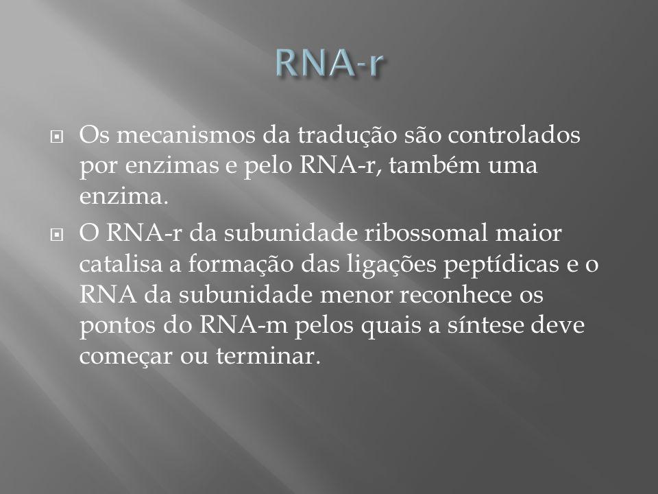 Os mecanismos da tradução são controlados por enzimas e pelo RNA-r, também uma enzima. O RNA-r da subunidade ribossomal maior catalisa a formação das