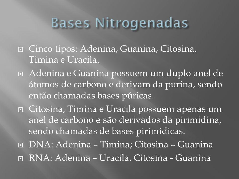 Cinco tipos: Adenina, Guanina, Citosina, Timina e Uracila. Adenina e Guanina possuem um duplo anel de átomos de carbono e derivam da purina, sendo ent