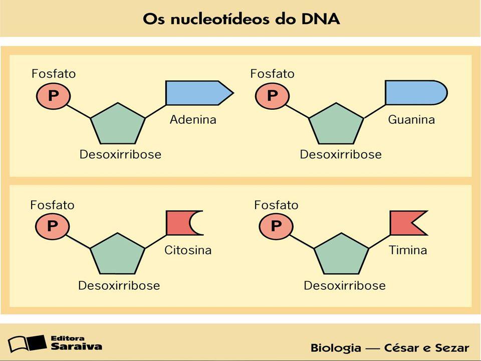 Francis Crick e James Watson ganharam o Nobel da Medicina por determinar cientificamente que o DNA é uma dupla hélice.