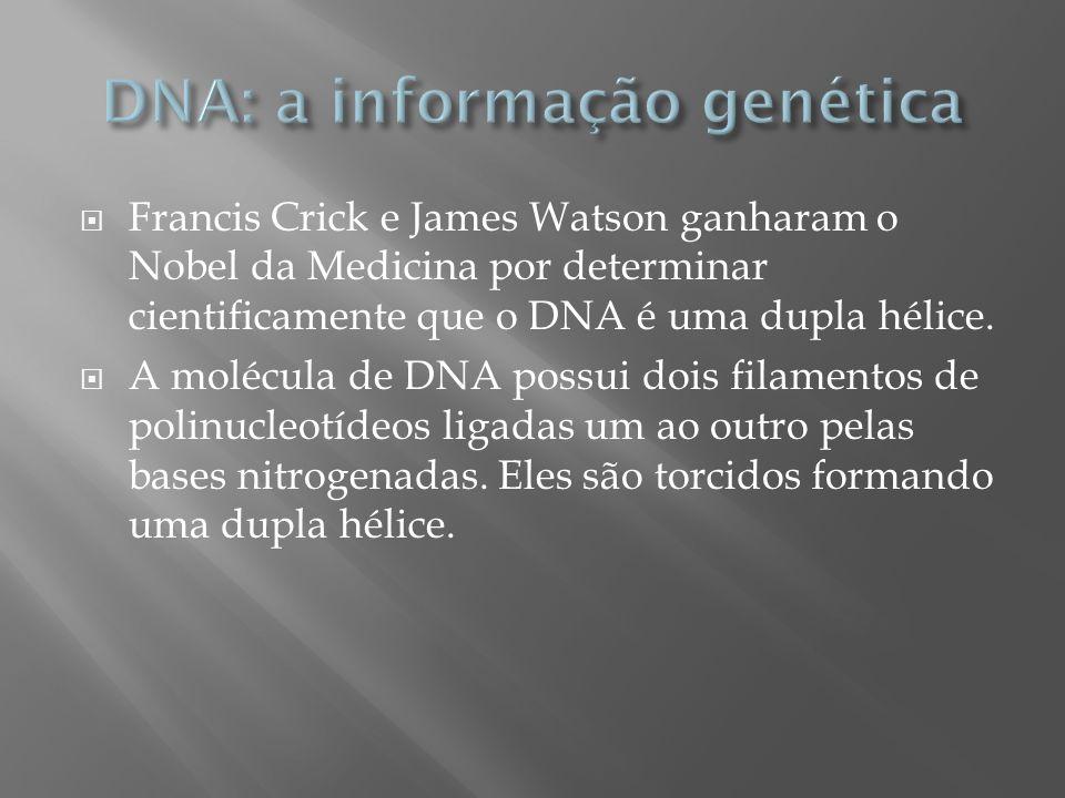 Francis Crick e James Watson ganharam o Nobel da Medicina por determinar cientificamente que o DNA é uma dupla hélice. A molécula de DNA possui dois f