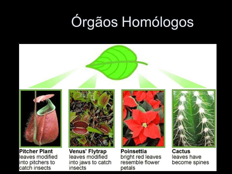 Órgãos Homólogos