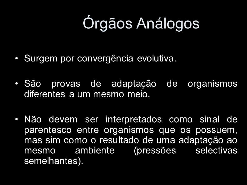 Surgem por convergência evolutiva. São provas de adaptação de organismos diferentes a um mesmo meio. Não devem ser interpretados como sinal de parente
