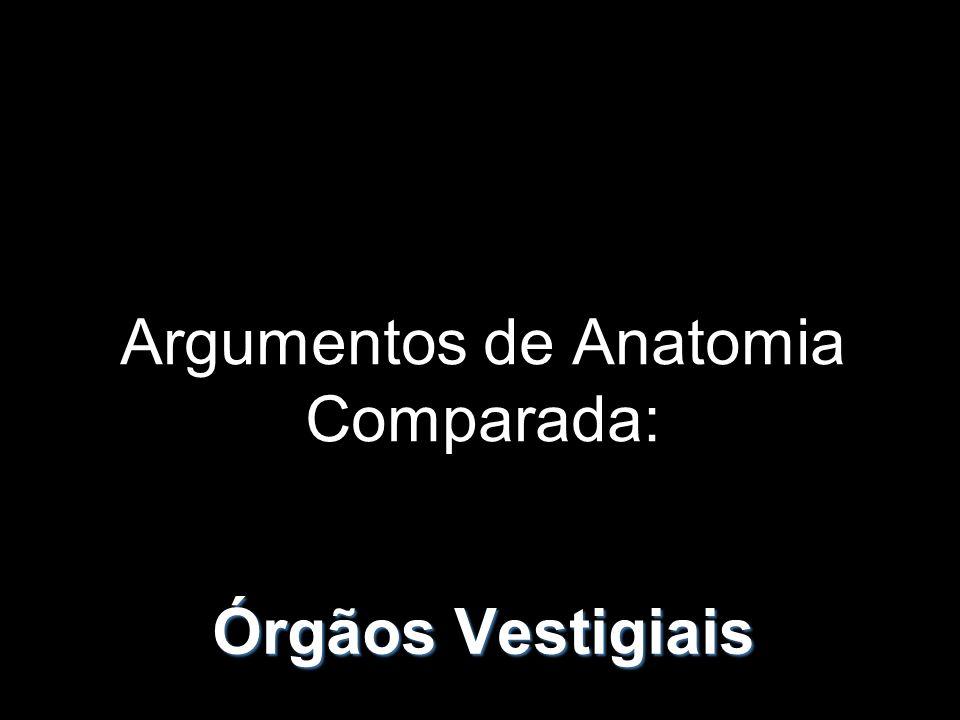 Argumentos de Anatomia Comparada: Órgãos Vestigiais