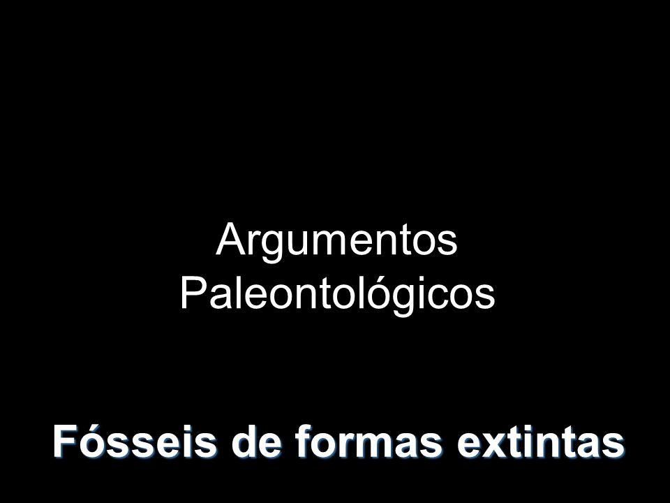 Argumentos Paleontológicos Fósseis de formas extintas
