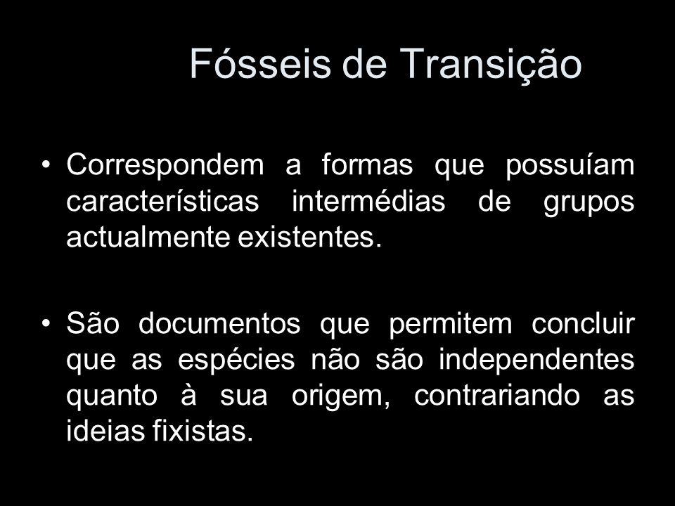 Fósseis de Transição Correspondem a formas que possuíam características intermédias de grupos actualmente existentes. São documentos que permitem conc