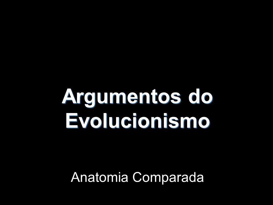 Argumentos Embriológicos