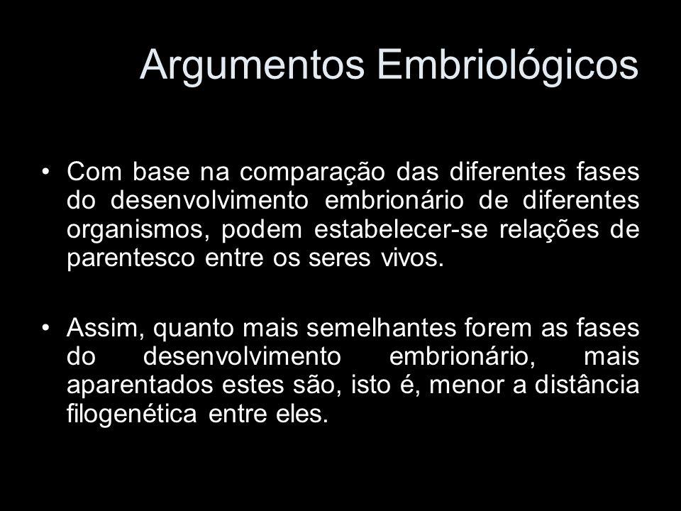 Com base na comparação das diferentes fases do desenvolvimento embrionário de diferentes organismos, podem estabelecer-se relações de parentesco entre