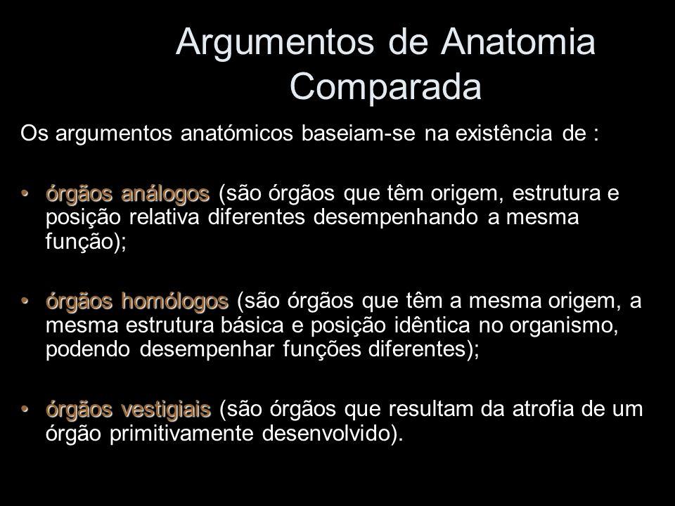 Argumentos de Anatomia Comparada Os argumentos anatómicos baseiam-se na existência de : órgãos análogosórgãos análogos (são órgãos que têm origem, est