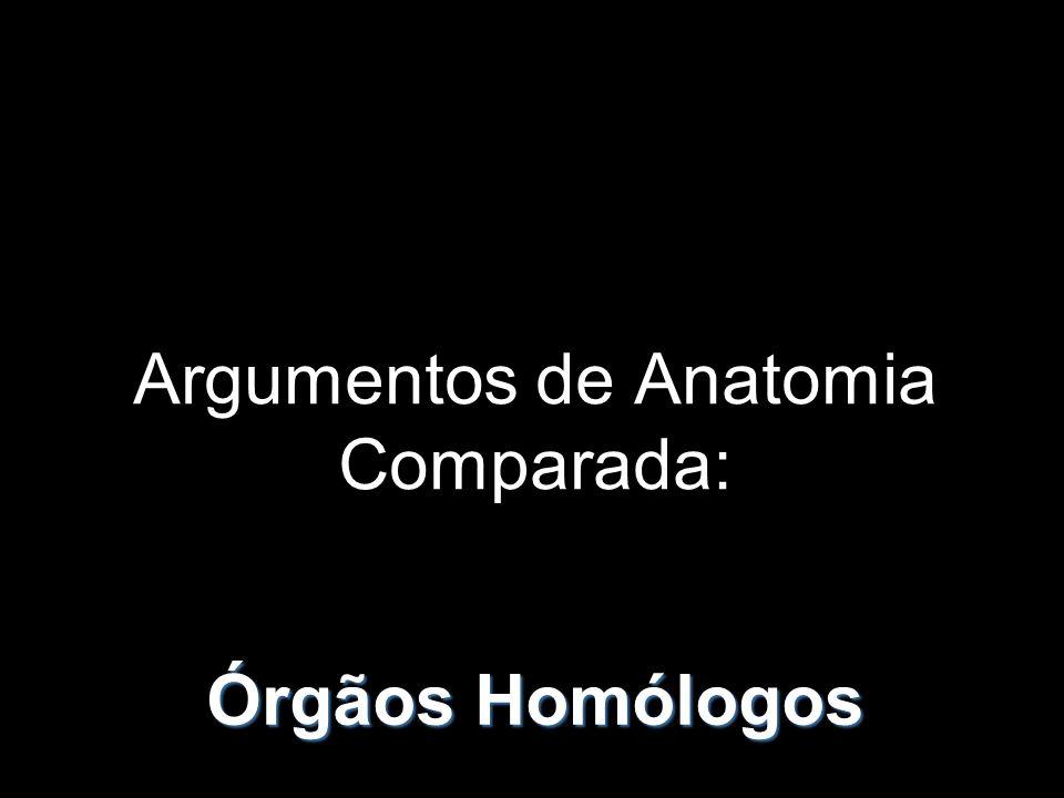 São órgãos que tiveram significado morfofuncional num antepassado, mas que no presente têm uma função reduzida ou não evidente.