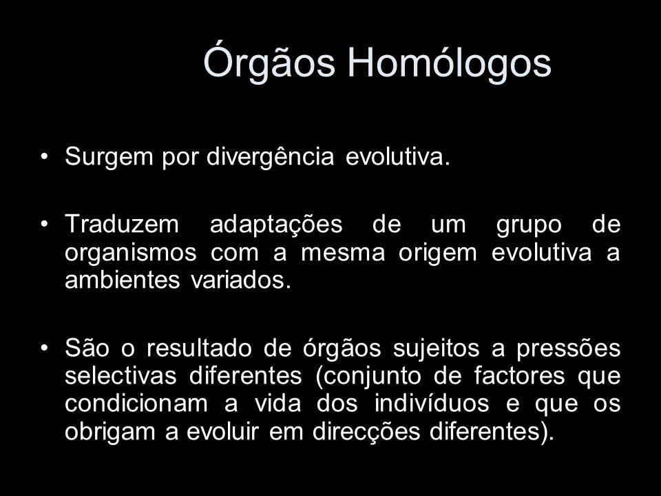 Surgem por divergência evolutiva. Traduzem adaptações de um grupo de organismos com a mesma origem evolutiva a ambientes variados. São o resultado de