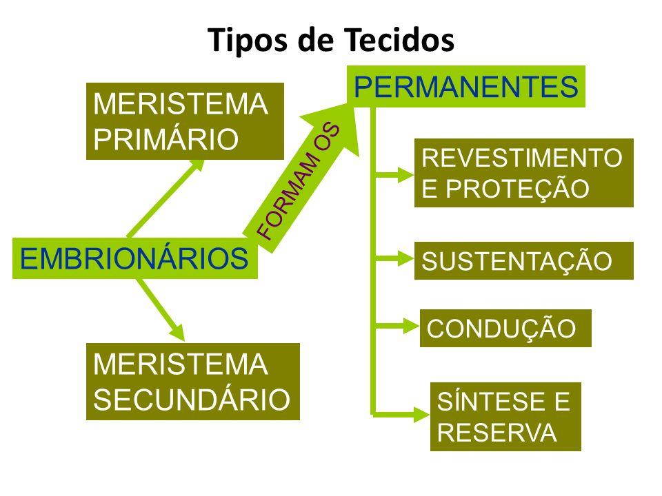 EMBRIONÁRIOS MERISTEMA PRIMÁRIO MERISTEMA SECUNDÁRIO PERMANENTES REVESTIMENTO E PROTEÇÃO SUSTENTAÇÃO CONDUÇÃO SÍNTESE E RESERVA FORMAM OS Tipos de Tec