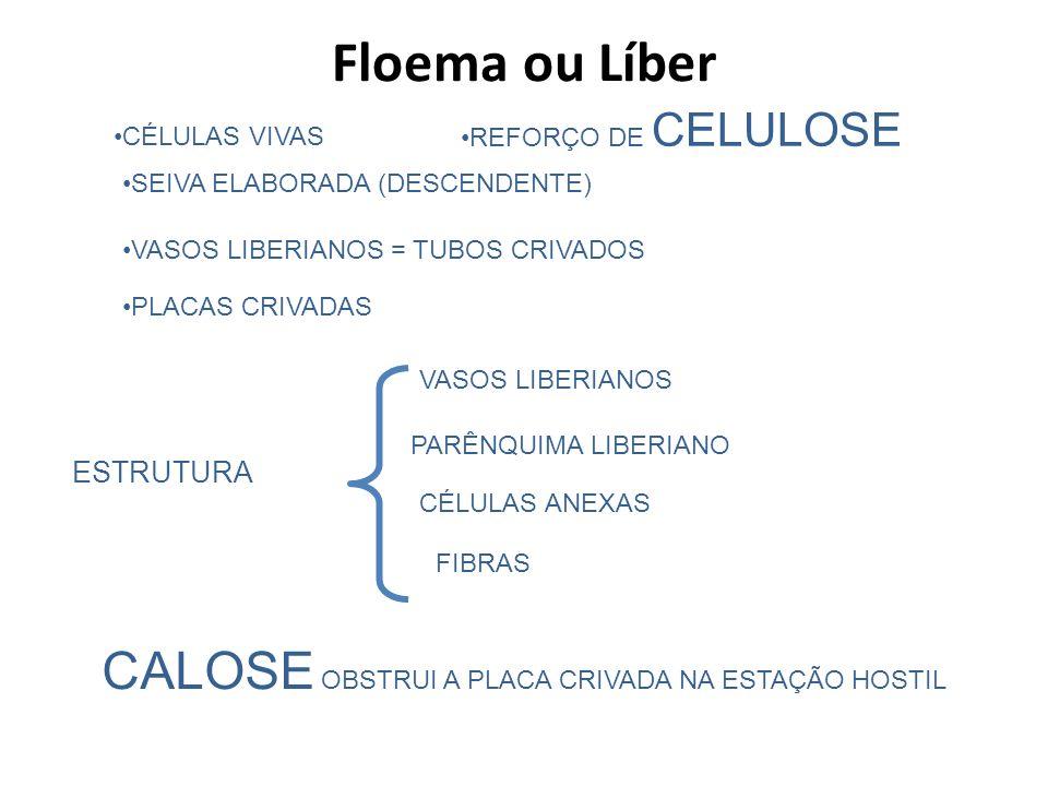 REFORÇO DE CELULOSE CÉLULAS VIVAS SEIVA ELABORADA (DESCENDENTE) VASOS LIBERIANOS = TUBOS CRIVADOS PLACAS CRIVADAS FIBRAS CALOSE OBSTRUI A PLACA CRIVAD