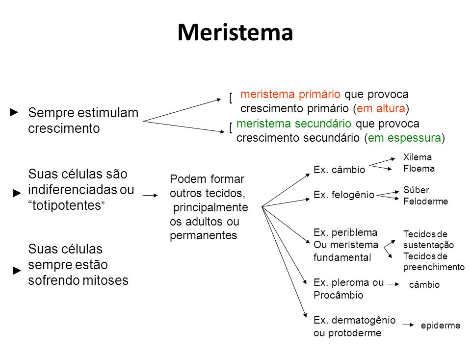 Meristema Sempre estimulam crescimento Suas células são indiferenciadas ou totipotentes Suas células sempre estão sofrendo mitoses meristema secundári