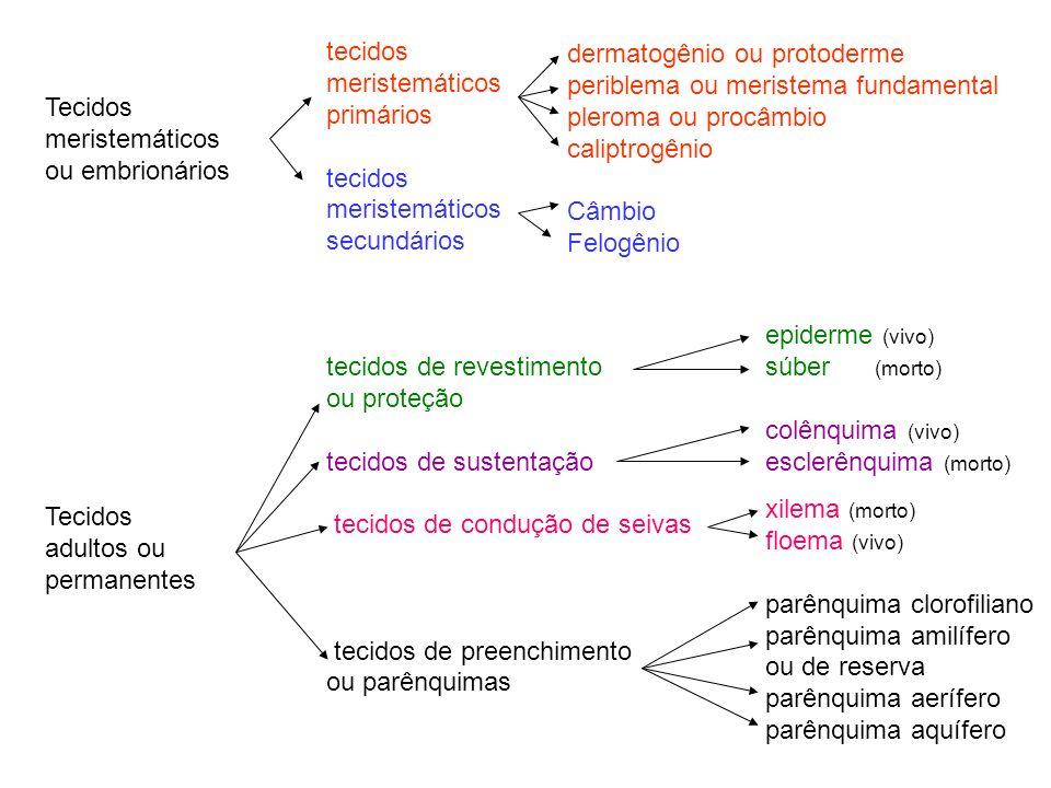 Tecidos meristemáticos ou embrionários Tecidos adultos ou permanentes tecidos meristemáticos primários tecidos meristemáticos secundários tecidos de r