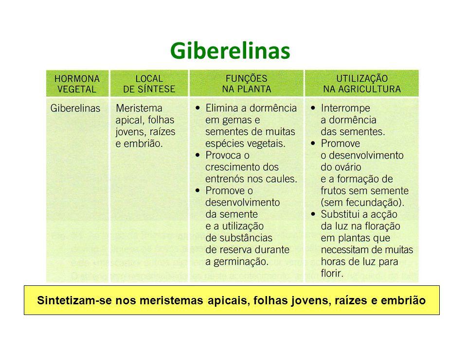 Giberelinas Sintetizam-se nos meristemas apicais, folhas jovens, raízes e embrião