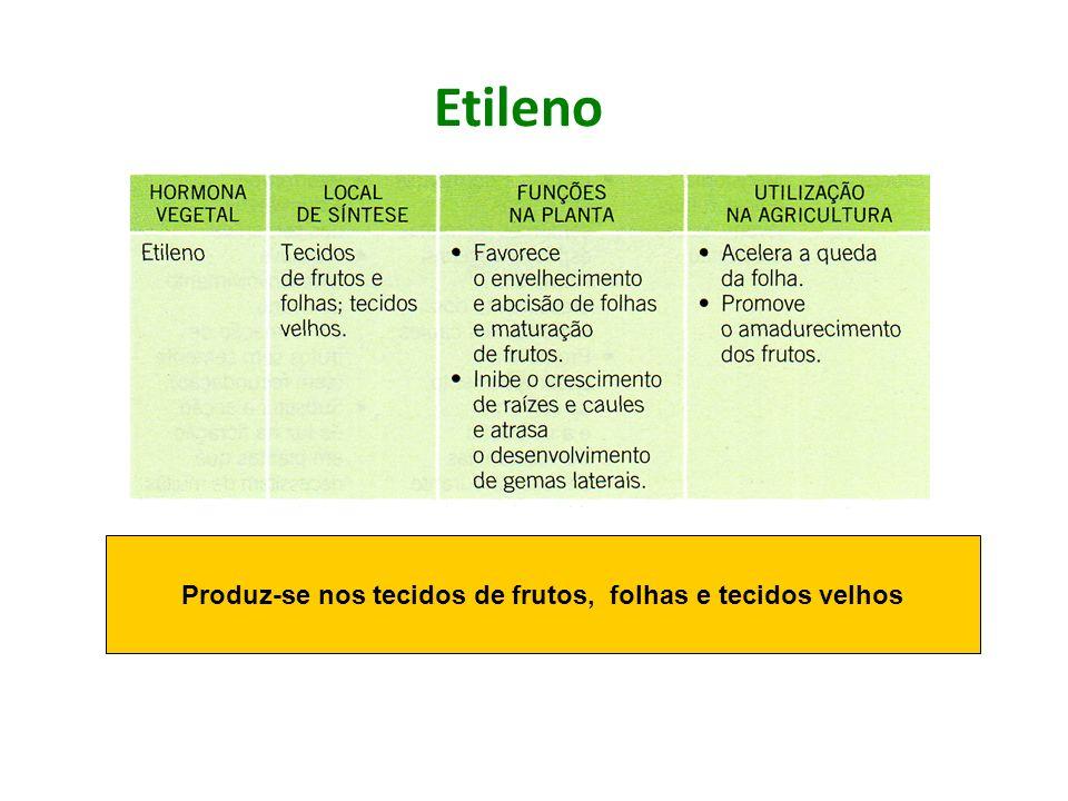 Etileno Produz-se nos tecidos de frutos, folhas e tecidos velhos