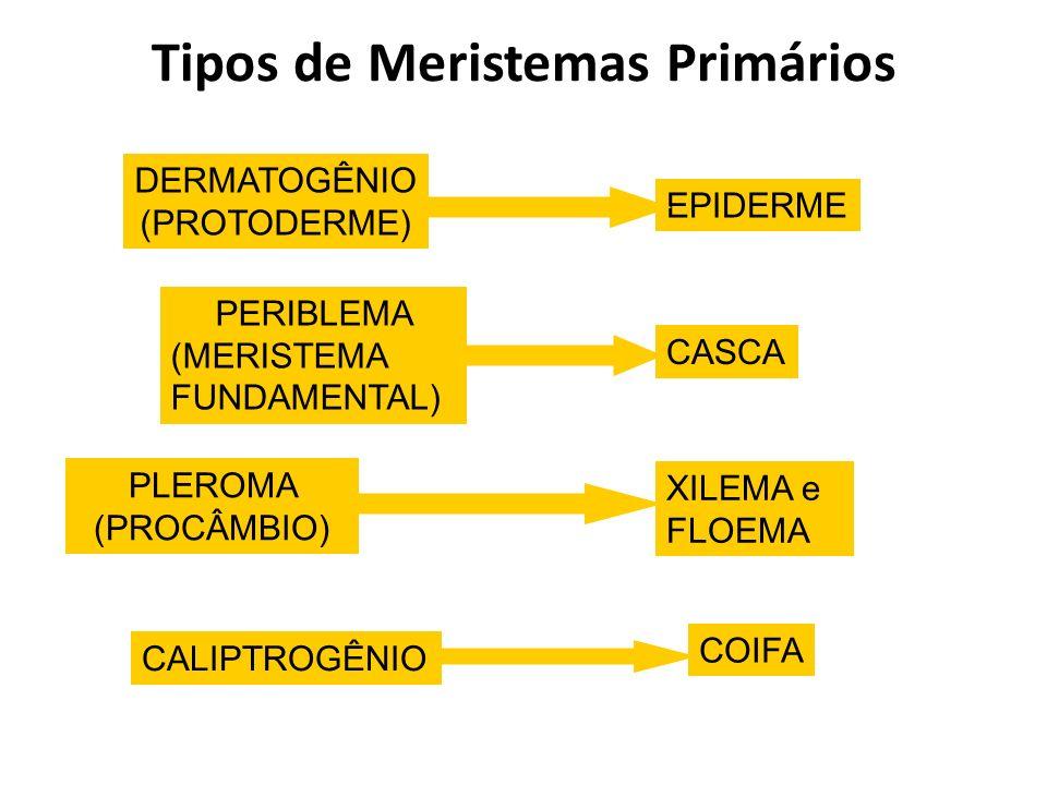 Tipos de Meristemas Primários DERMATOGÊNIO (PROTODERME) EPIDERME PERIBLEMA (MERISTEMA FUNDAMENTAL) CASCA PLEROMA (PROCÂMBIO) XILEMA e FLOEMA CALIPTROG