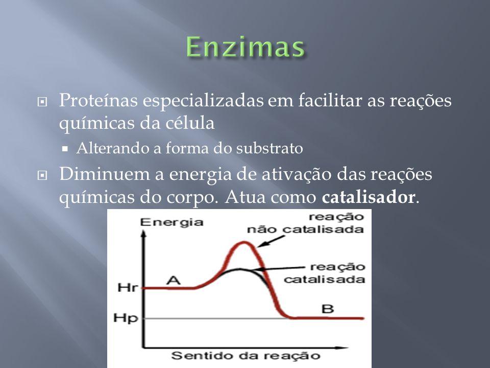 Proteínas especializadas em facilitar as reações químicas da célula Alterando a forma do substrato Diminuem a energia de ativação das reações químicas