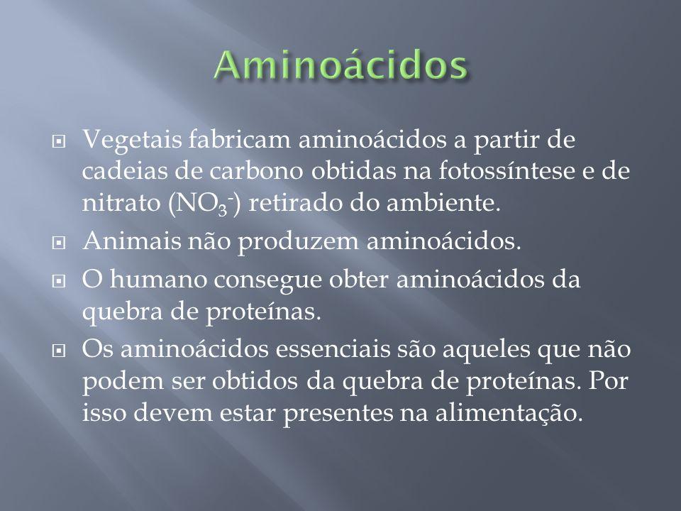 Vegetais fabricam aminoácidos a partir de cadeias de carbono obtidas na fotossíntese e de nitrato (NO 3 - ) retirado do ambiente. Animais não produzem