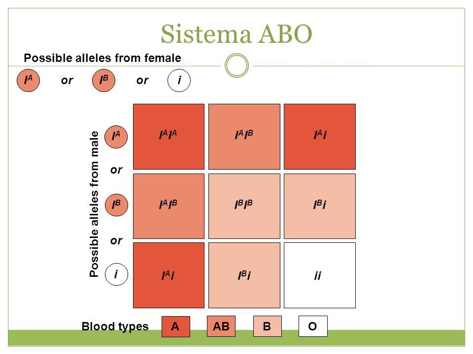 Possible alleles from female IAIA or IBIB i IAIA IBIB i Possible alleles from male AABBOBlood types IAIAIAIA IAIBIAIB IAiIAi IAIBIAIB IBIBIBIB IBiIBi