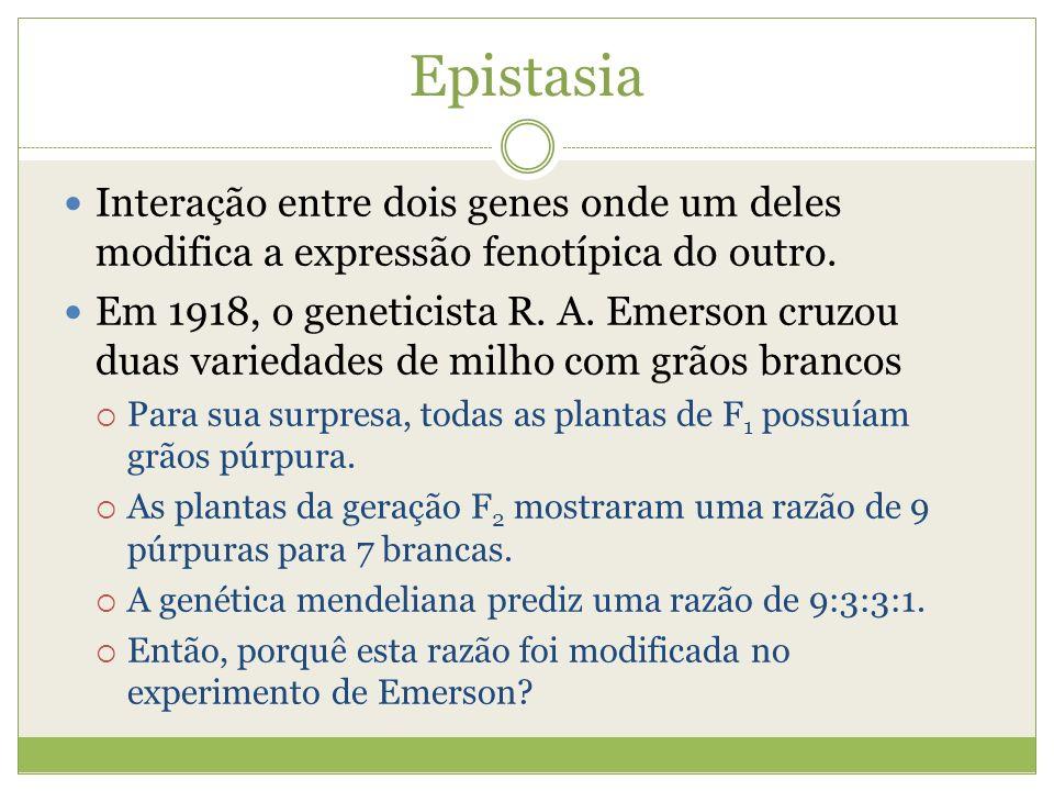 Epistasia Interação entre dois genes onde um deles modifica a expressão fenotípica do outro. Em 1918, o geneticista R. A. Emerson cruzou duas variedad