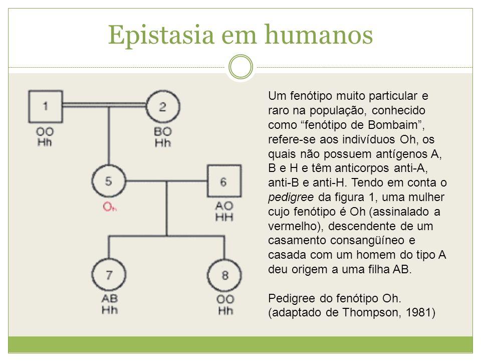 Epistasia em humanos Um fenótipo muito particular e raro na população, conhecido como fenótipo de Bombaim, refere-se aos indivíduos Oh, os quais não p