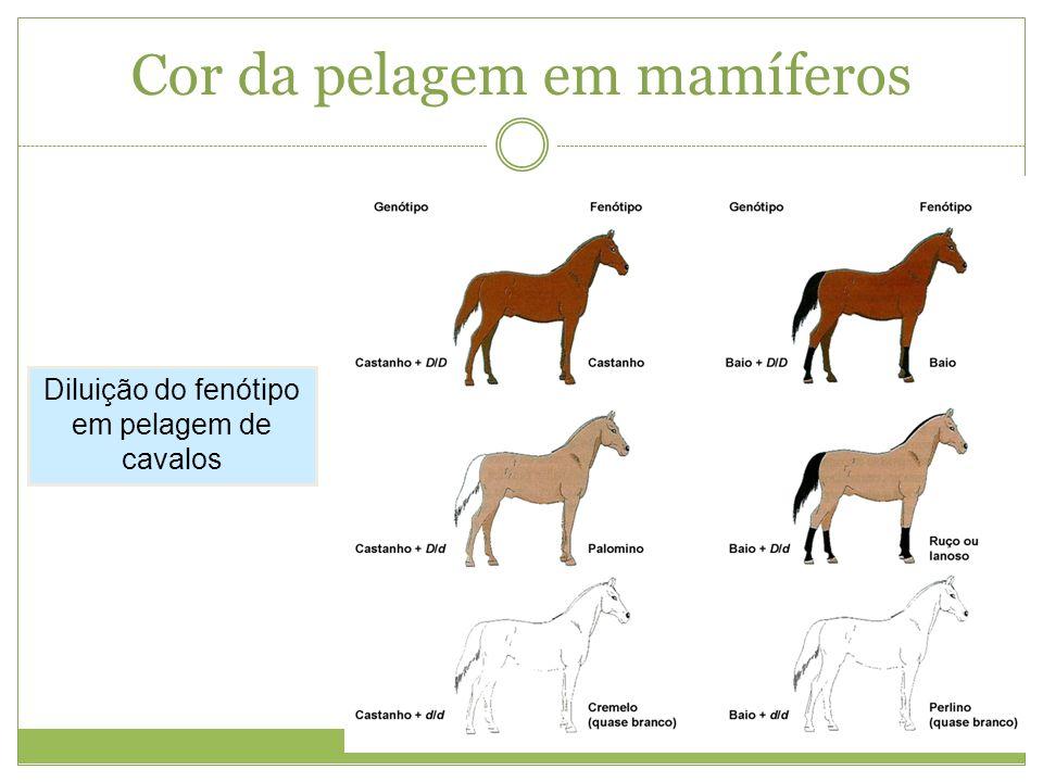 Cor da pelagem em mamíferos Diluição do fenótipo em pelagem de cavalos