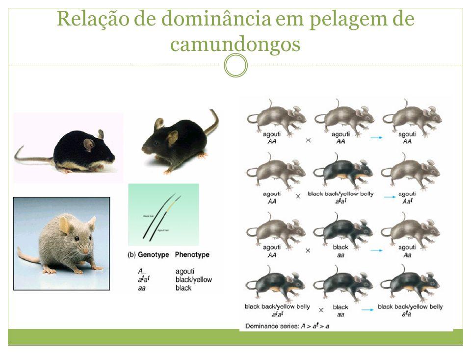Relação de dominância em pelagem de camundongos