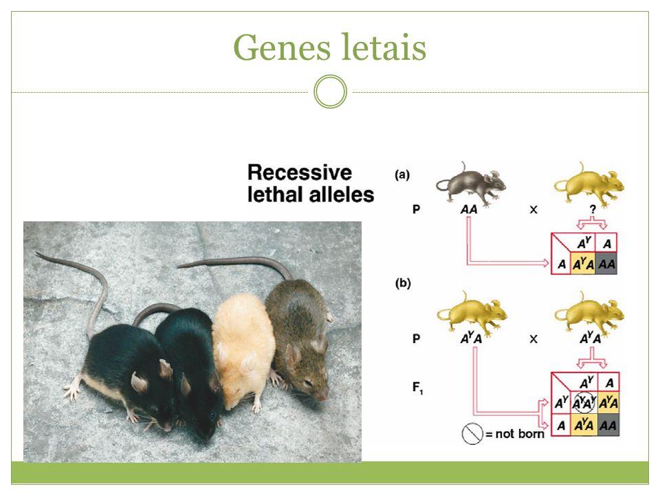 Genes letais