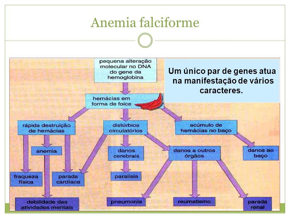 Anemia falciforme Um único par de genes atua na manifestação de vários caracteres.