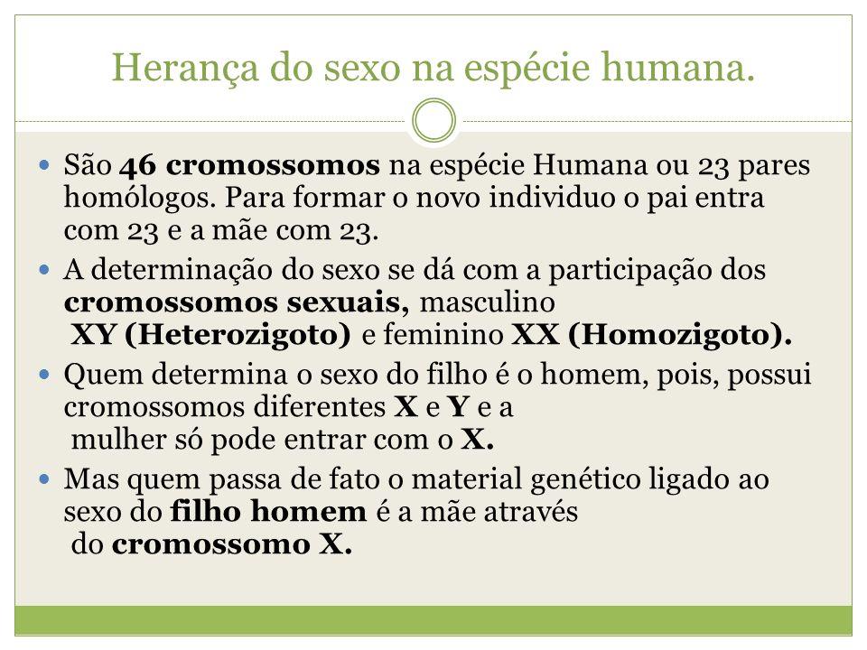 Herança do sexo na espécie humana. São 46 cromossomos na espécie Humana ou 23 pares homólogos. Para formar o novo individuo o pai entra com 23 e a mãe
