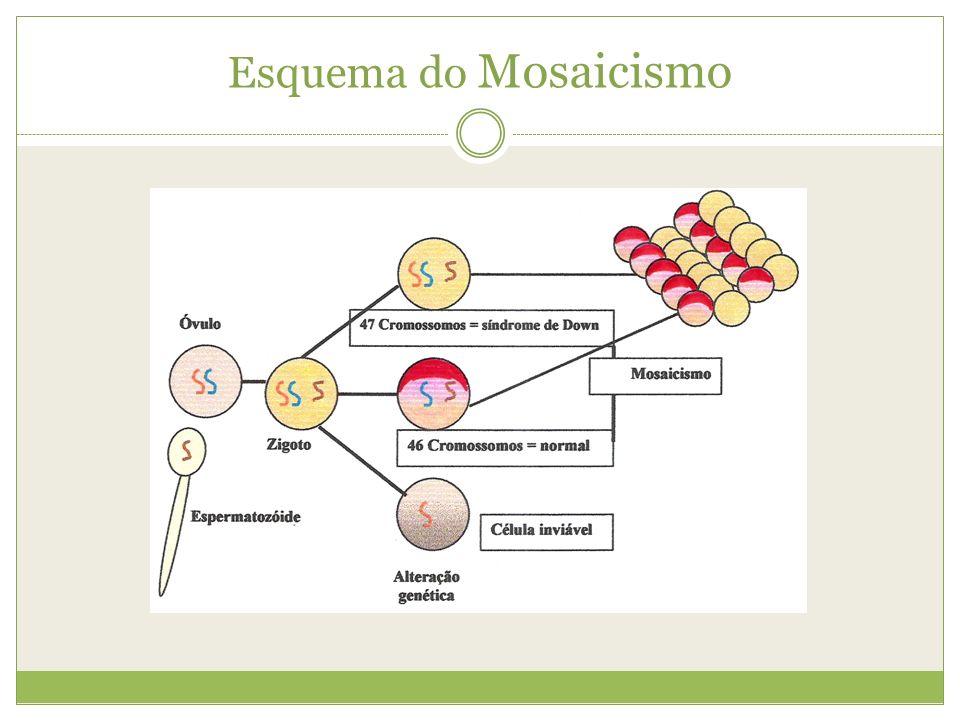 Esquema do Mosaicismo