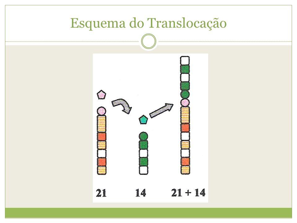 Esquema do Translocação