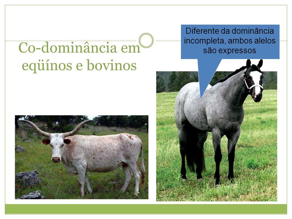 Co-dominância em eqüínos e bovinos Diferente da dominância incompleta, ambos alelos são expressos