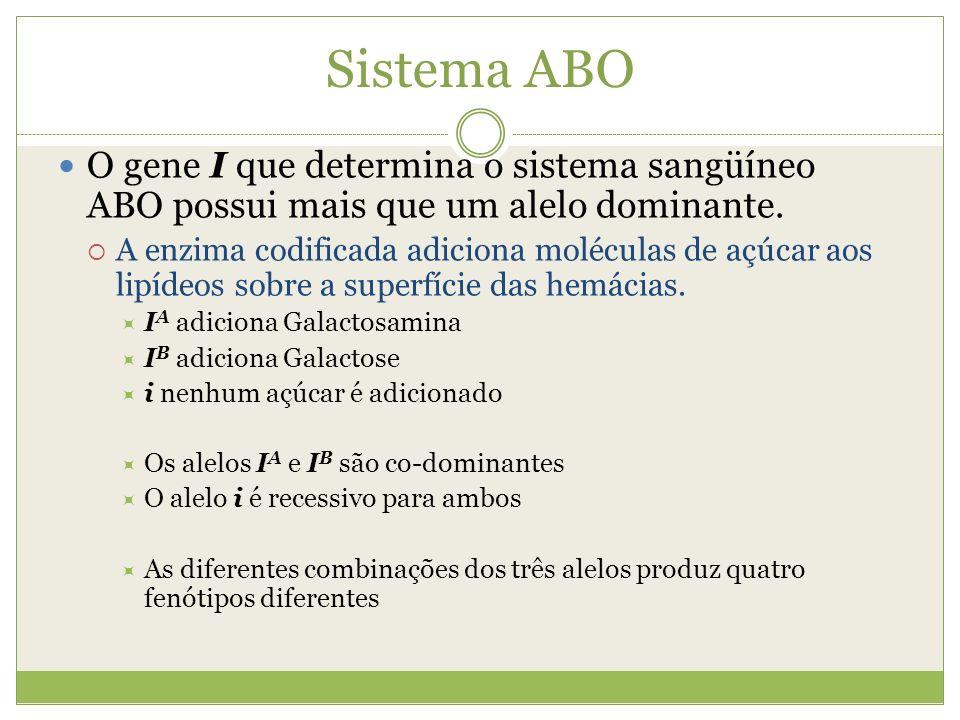 Sistema ABO O gene I que determina o sistema sangüíneo ABO possui mais que um alelo dominante. A enzima codificada adiciona moléculas de açúcar aos li