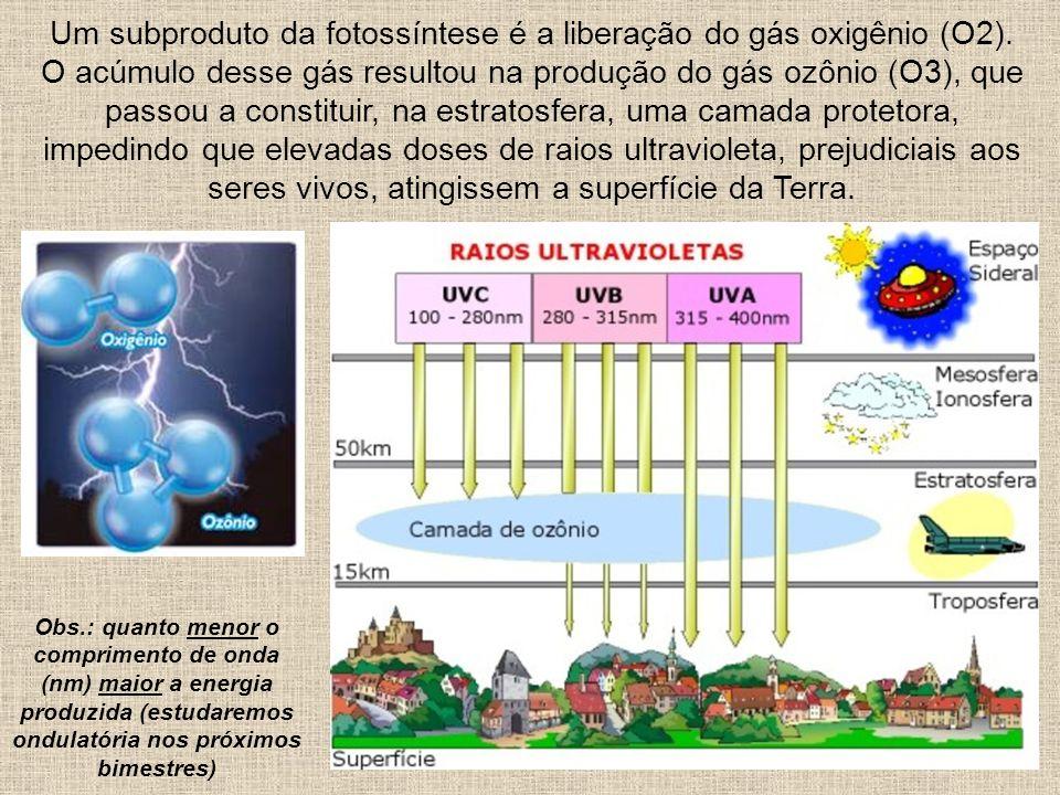 Um subproduto da fotossíntese é a liberação do gás oxigênio (O2). O acúmulo desse gás resultou na produção do gás ozônio (O3), que passou a constituir